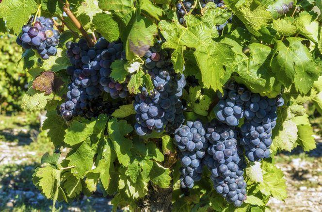 Ontdek de prachtige omgeving van Languedoc-Roussillon